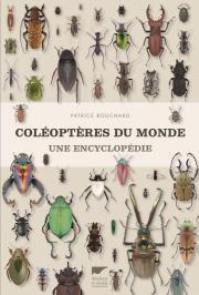 coléoptères.jpg